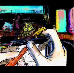 """""""Drawing A Tortoise Still Life"""" By C. A. Brown"""